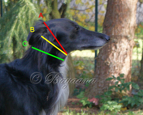 How to measure your dog for your new Bayaana collar